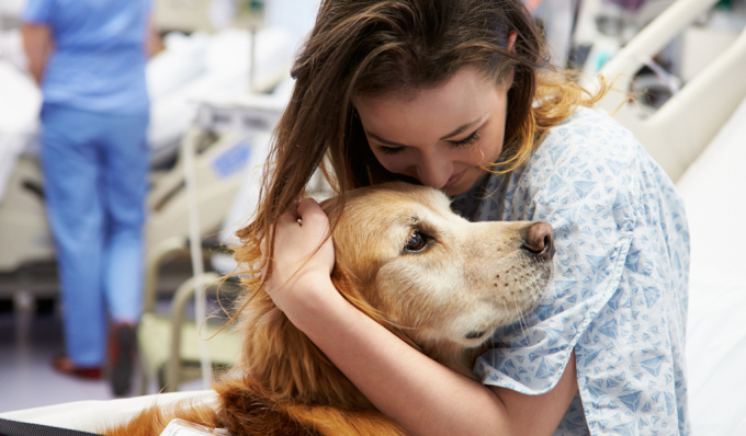 Animal Assisted Addiction Rehab Therapy – RehabNet.com